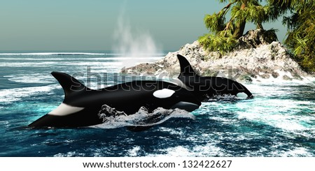 Orca Killer Whales - Two Killer whales swim into an ocean inlet looking for fish or seal prey. - stock photo