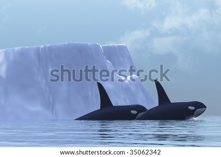 ORCA - Two Killer Whales swim near an iceberg in the Arctic Ocean. - stock photo