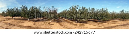 Orchard and plowed land in Israel                                - stock photo