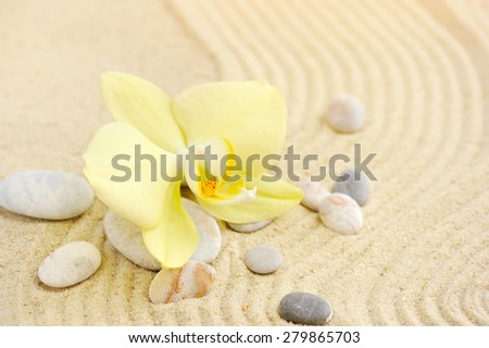 Orchid and sea stones on sandy beach - stock photo