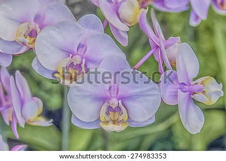 Orchid blooms, digital oil painting - stock photo