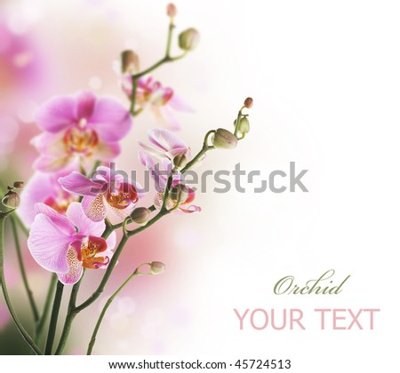 Orchid Border - stock photo