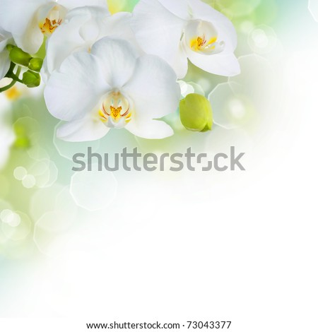 Orchid border design - stock photo