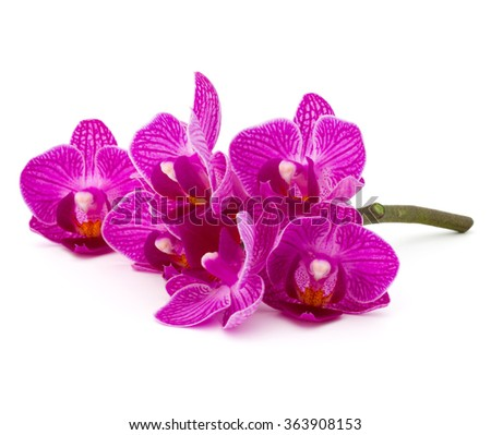 Orchid flower head bouquet  isolated on white background cutout - stock photo