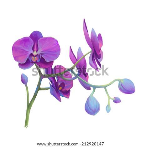 Orchid  flower illustration. - stock photo
