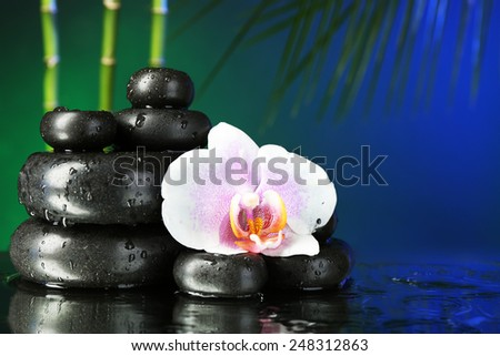 Orchid flower with water drops and pebble stones on dark colorful background - stock photo