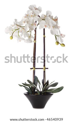Orchid Flowers in Pot - stock photo