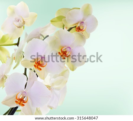 Orchid flowers on abstract background - stock photo