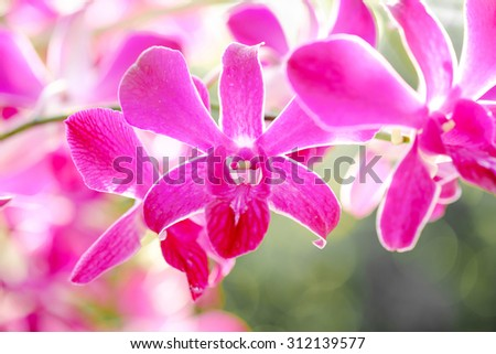 Orchid flowers on spring day. - stock photo