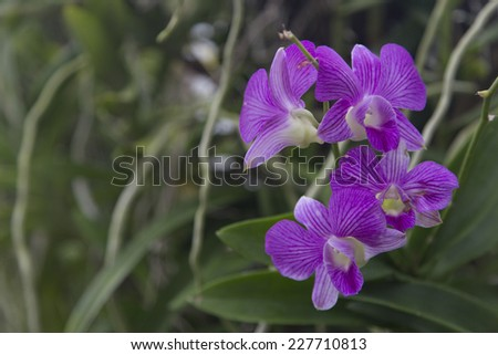 Orchid in spa garden - stock photo