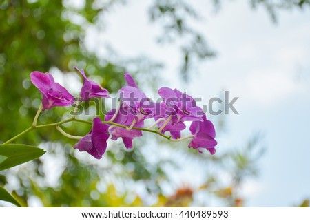 orchid in the garden - stock photo
