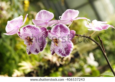 Orchid in the Kiev botanical garden greenhouse. Tropical flower orchid - stock photo