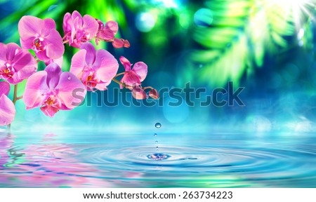 orchid in zen garden with dew on pond   - stock photo