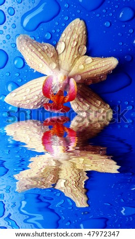 orchid on blue background with reflecting effect - stock photo