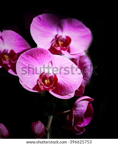 Orchid- Orchid on a dark background - stock photo