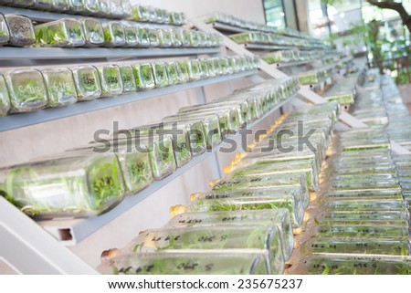 Orchid tissue culture in a bottle. - stock photo