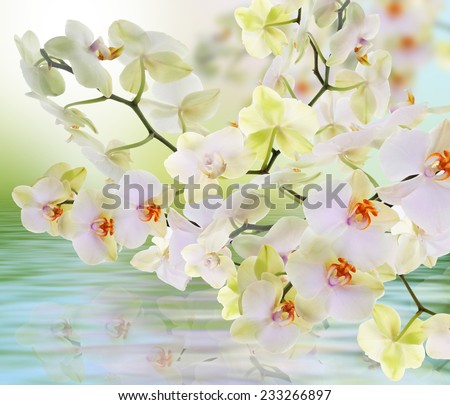 Orchid.Water flora - stock photo