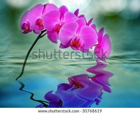 orchid with - stock photo