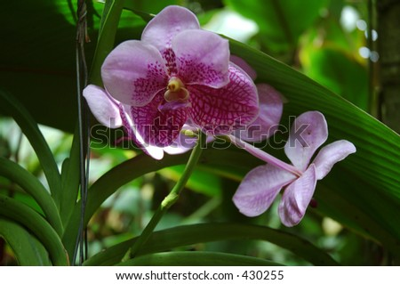 Orchids - stock photo