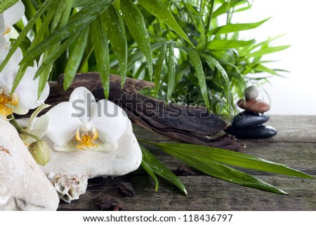 Orchids on stones and palm against white background spa concept - stock photo
