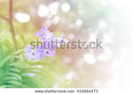 Orchids purple ,orchids purple Is considered the queen of flowers in Thailand, fill color filter pastel gradient tone. - stock photo