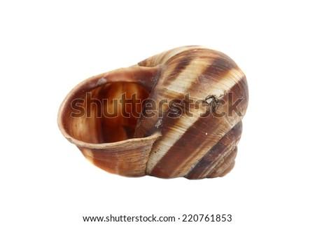 ordinary home garden snail - stock photo