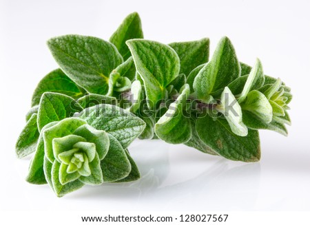 Oregano isolated on white - stock photo