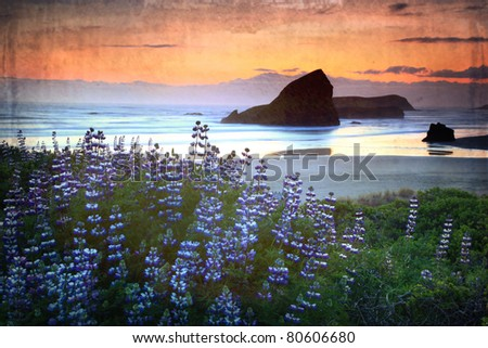 Oregon sunset along the coast with lupine in the foreground and a vintage finish - stock photo
