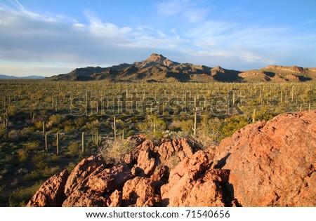 Organ Pipe Cactus National Monument in Arizona. - stock photo