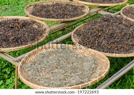 organic black white of tea dry process after picked. - stock photo