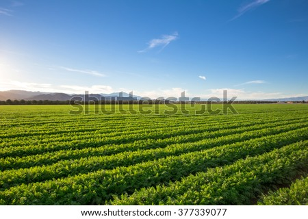 Organic Farm Land Crops In California Blue skies, palm trees, multiple layers of mountains add to this organic and fertile farm land in California. - stock photo