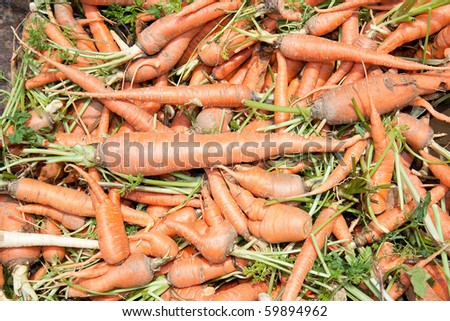 Organic fresh carrots piled up at Pike Place Market in Staro Selo, Serbia - stock photo