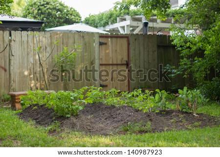 Organic Garden in Backyard - stock photo