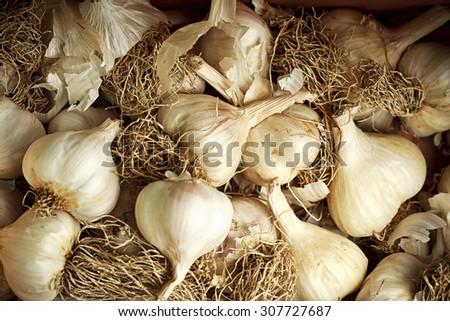organic garlic - stock photo