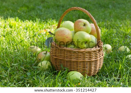 Organic green apples in a wicker basket on the green grass in sunny summer day - stock photo