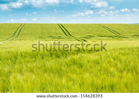 Organic Green spring grains field with rails from the tractor - stock photo