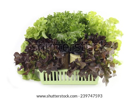 Organic hydroponic vegetable and salad dressing in basket isolated on white - stock photo