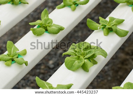 Organic hydroponic vegetable cultivation farm. - stock photo
