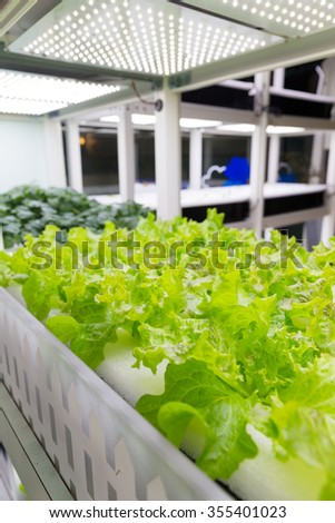 Organic hydroponic vegetable indoor - stock photo