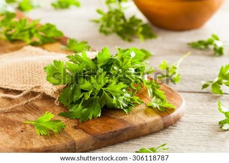 Organic Italian Flat Leaf Parsley Ready to Eat - stock photo