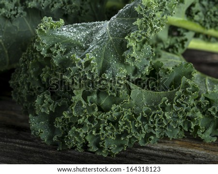 Organic kale with water droplets in closeup - stock photo