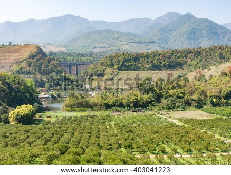 Organic orange farm in the valley with  small concrete dam,Northern of Thailand. - stock photo