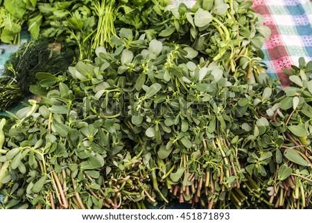 Organic purslane on farmer's market - stock photo