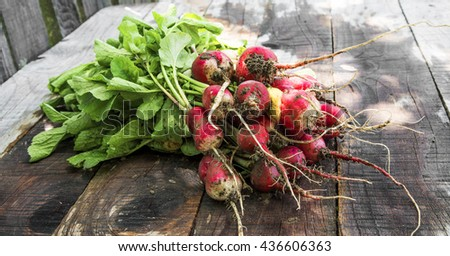 Organic radishes with mud freshly picked from garden on wooden background - stock photo