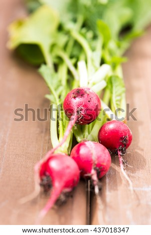 organic, small, red radishes, freshly harvested from home grown garden. isolated over a brown wood background, vertical with copy space - stock photo