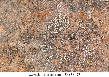 Organic Stone Texture - stock photo