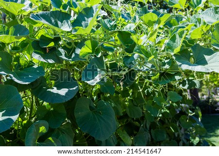 Organic urban garden in full growth at the end of the summer. - stock photo