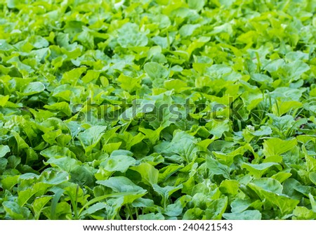 Organic vegetable plots. - stock photo