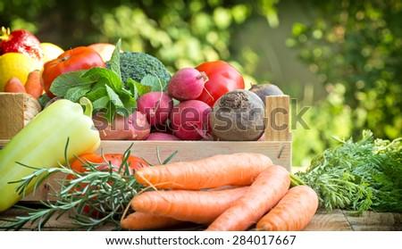 Organic vegetables  - stock photo