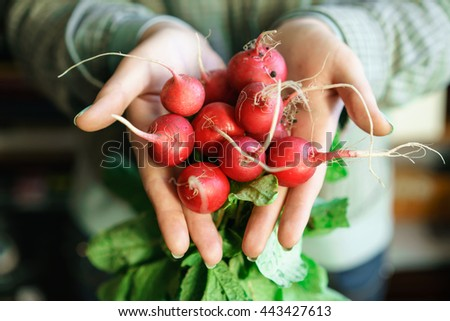 Organic vegetables. Farmers hands with freshly harvested vegetables. - stock photo